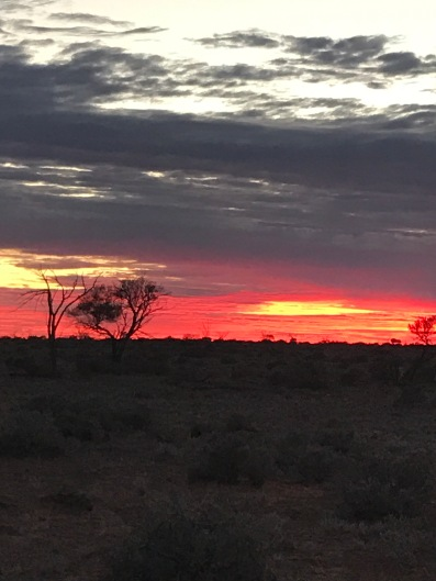 Bush sunrise