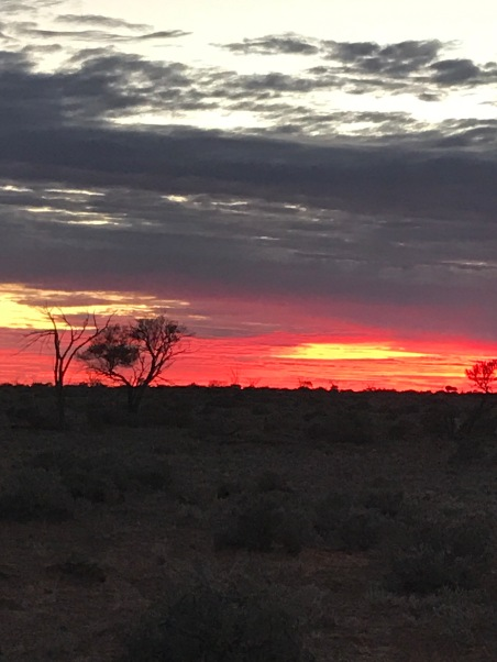 Bush sunrise
